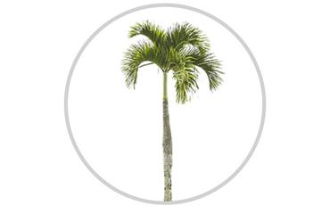 Sakkaroosipalmitaatti (Sucrose palmitate)